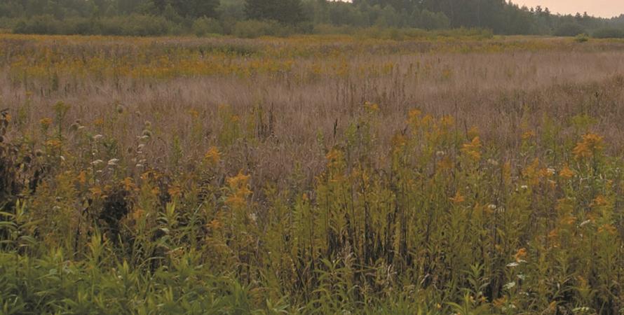 Informacja o wykaszaniu traw i chwastów