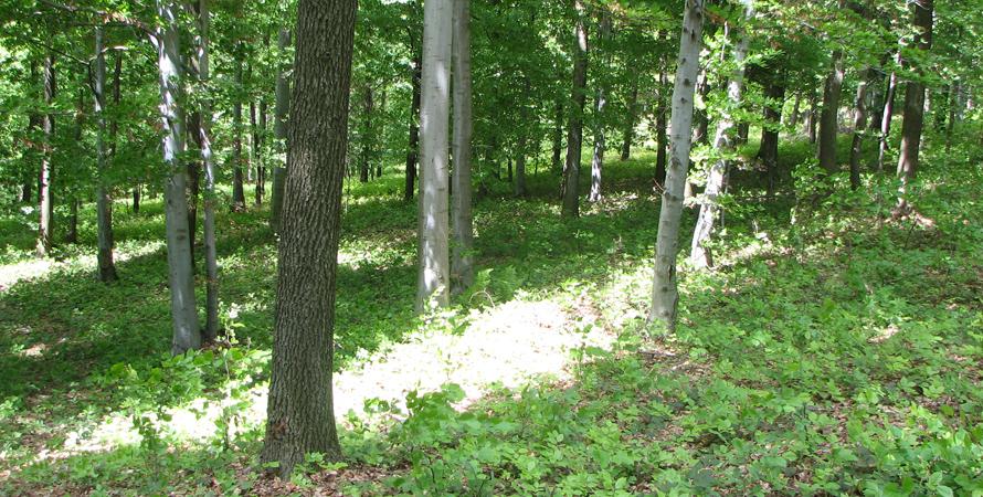 Informacja Ministerstwa Środowiska o realizacji programu monitoringu lasów