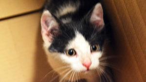 Szukamy domu dla znalezionego kociaka