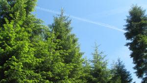 Zmiana przepisów dotycząca usuwania drzew i krzewów