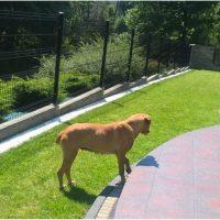 Pies szuka właściciela i nowego domu