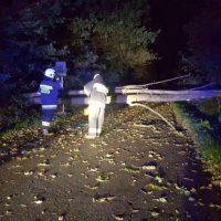 Ciężka noc strażaków - wichura łamie drzewa