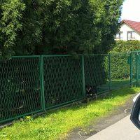 Psy biegające bez nadzoru w Woźnikach