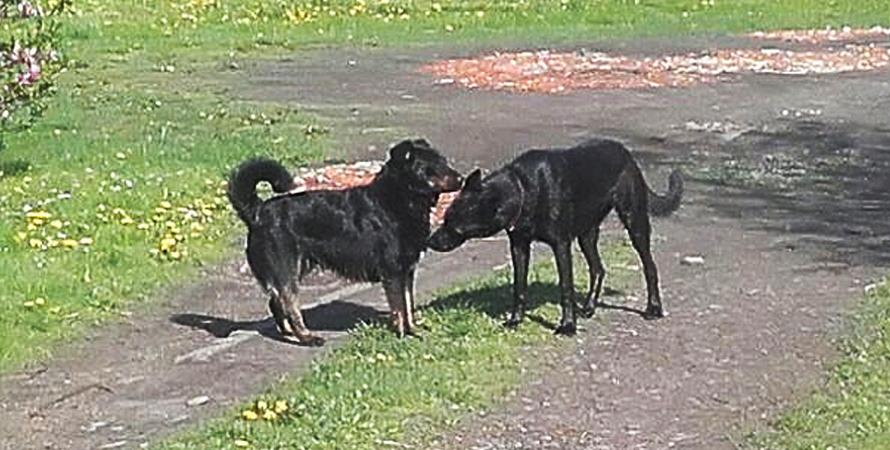 Ogłoszenie w sprawie obowiązków właścicieli i opiekunów psów
